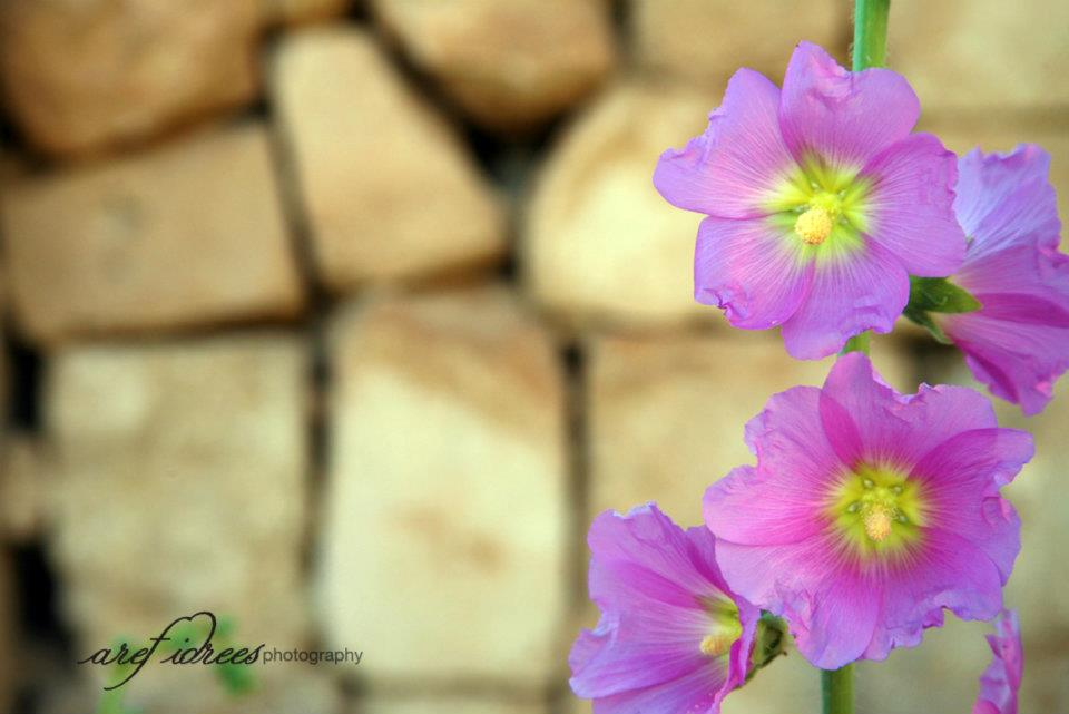 flowers-hdr